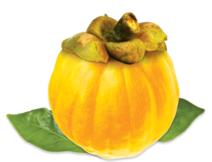 garcinia-cambogia-yellow-fruit1